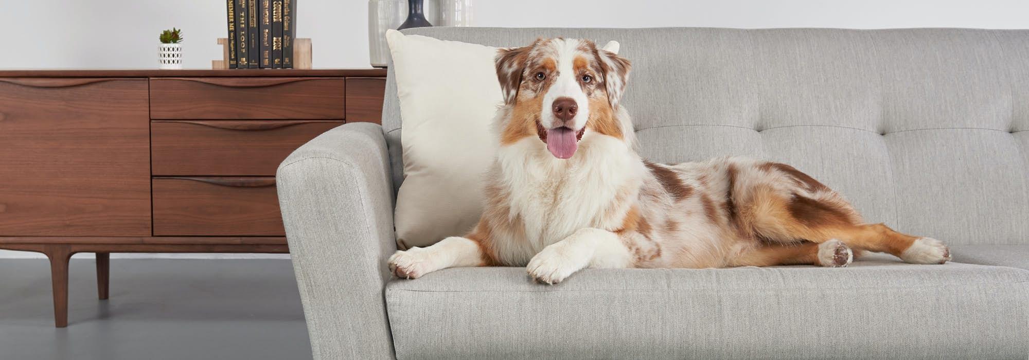 Pet Friendly Kid Furniture