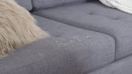 How to get Rid of Pet Hair - Furniture