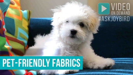 Pet-Friendly Fabrics by Joybird Furniture